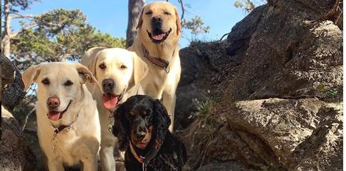 care4dogs begrüßt das Wochenende