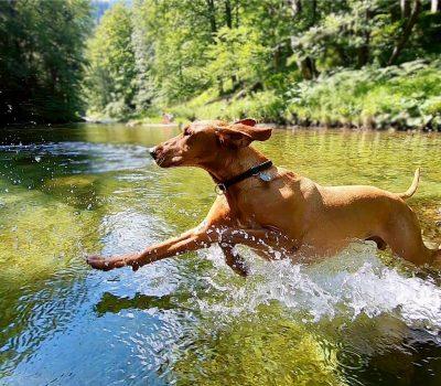 …Schwimmen & Bachwanderungen im Sommer…